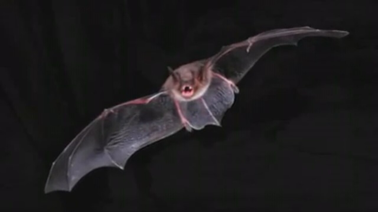 Rabies alert from dead bat in apartments