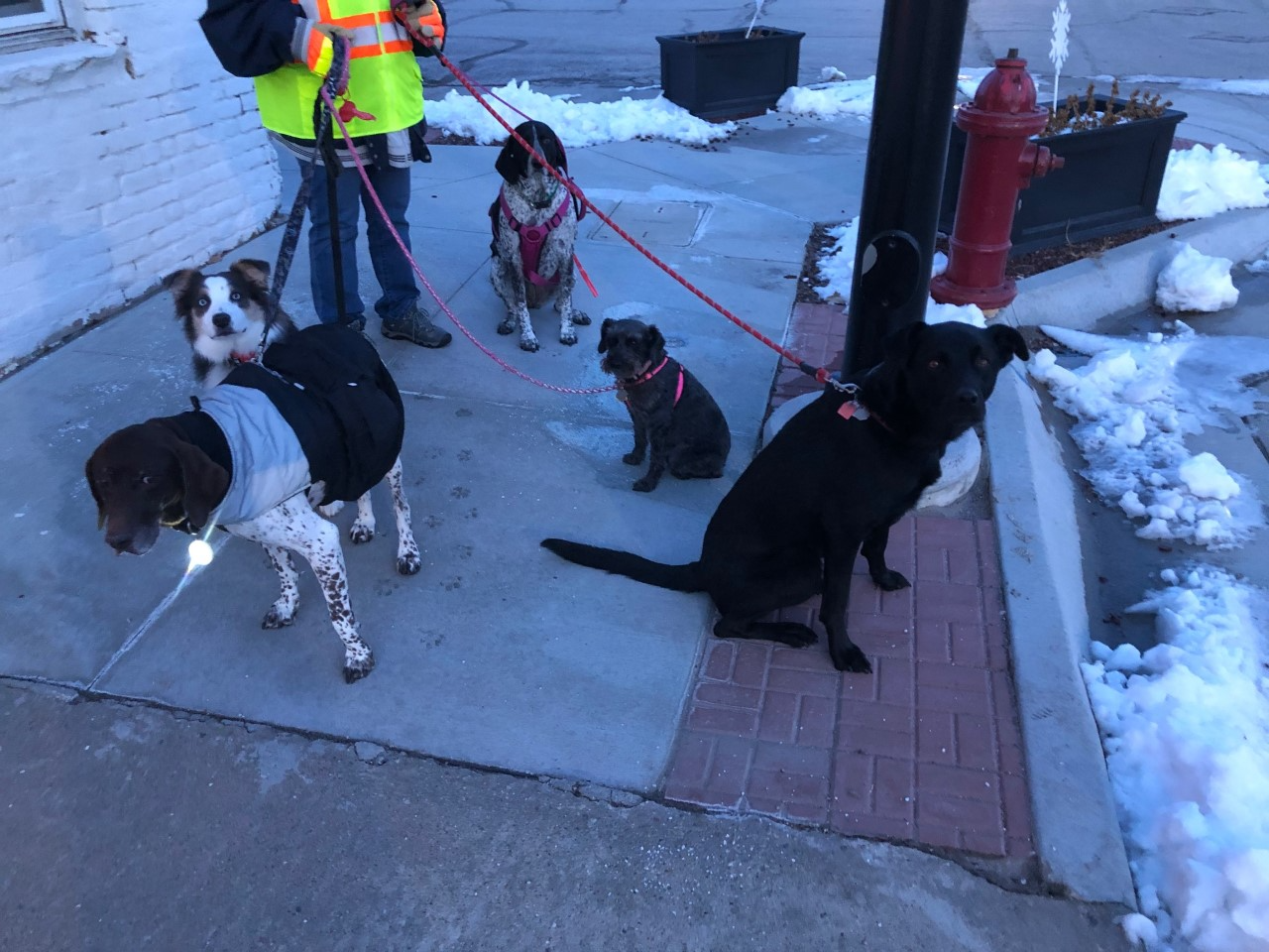 Chuck, Lucy, Athena, Rowdy & Ruger.png