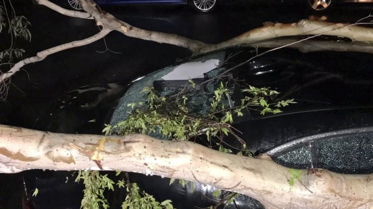 Storm wallops county; Downs trees, clogs roads