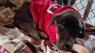 Barney defies the odds and needs a forever family