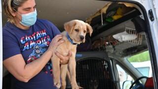 helen woodward puppies from texas_4.JPG
