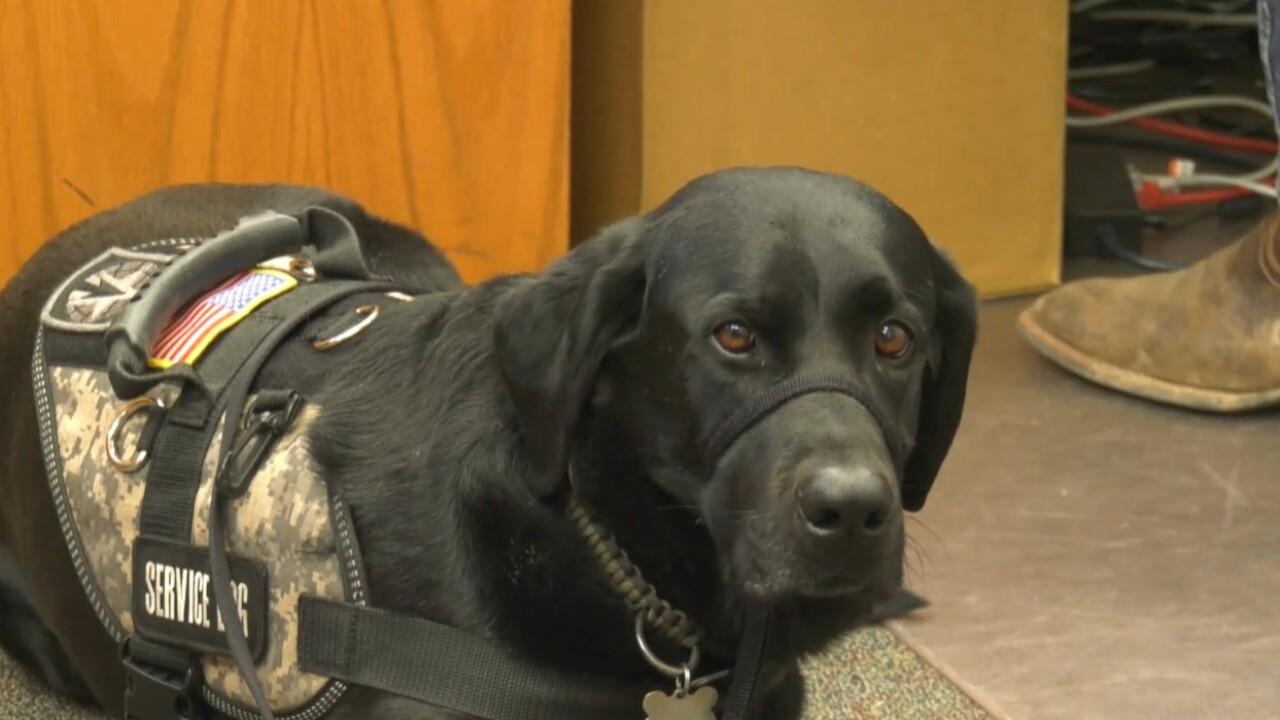 Jake Forman: Black Labrador Service dog
