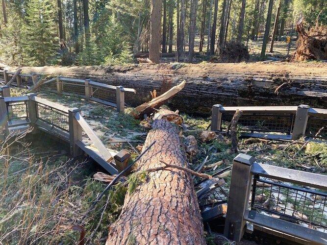 California Winds-Yosemite