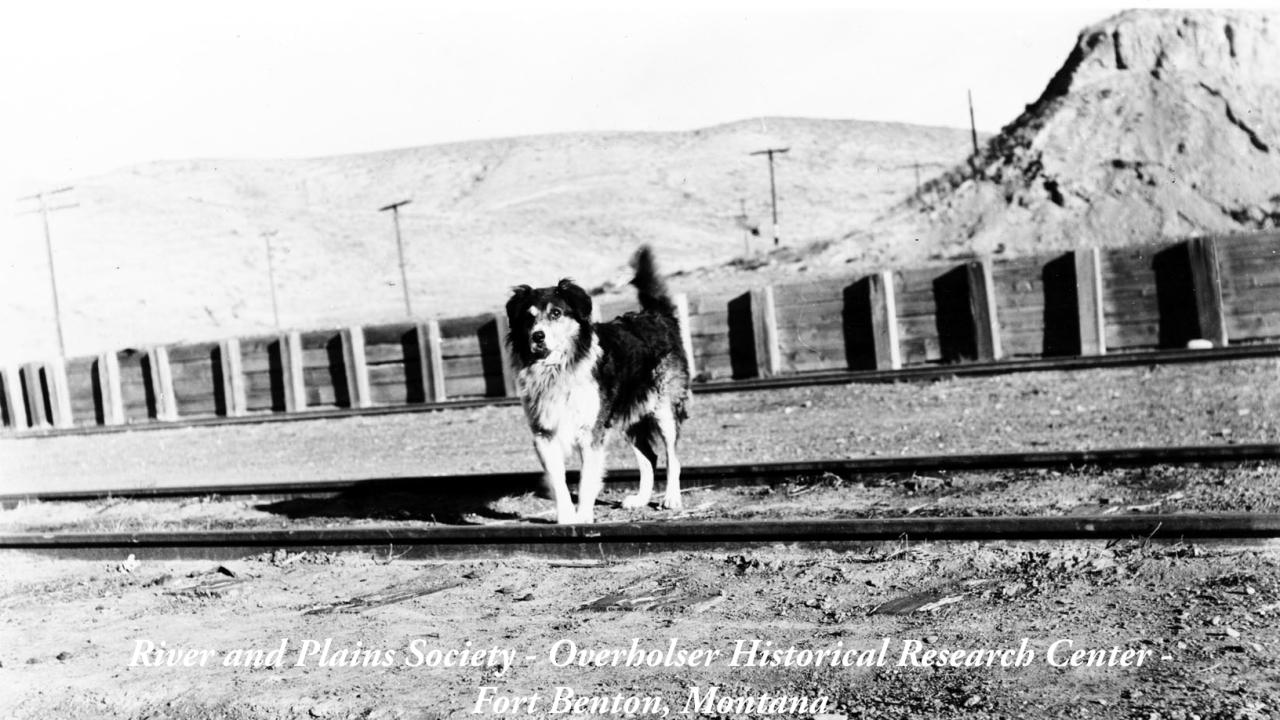 Shep, Montana's Faithful Dog