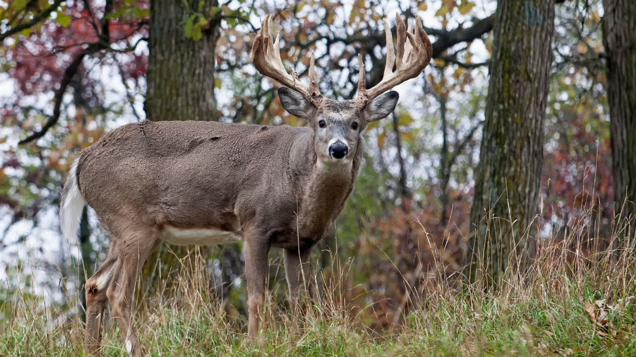 Another white-tailed deer suspected positive for Chronic Wasting Disease in Libby area