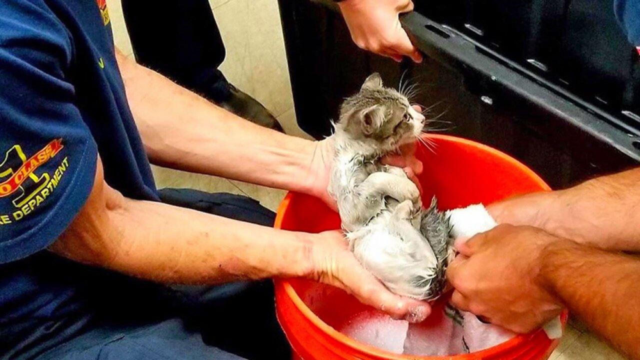 wptv-kitten-rescued-.jpg