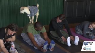 Goat Yoga w/Perrin and Chris!