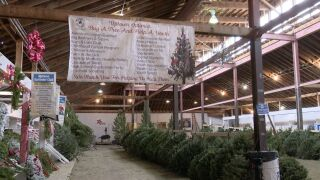 Christmas Tree Lot now open at Montana ExpoPark