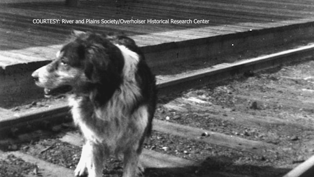 "Shep, the ""forever faithful"" dog of Fort Benton"