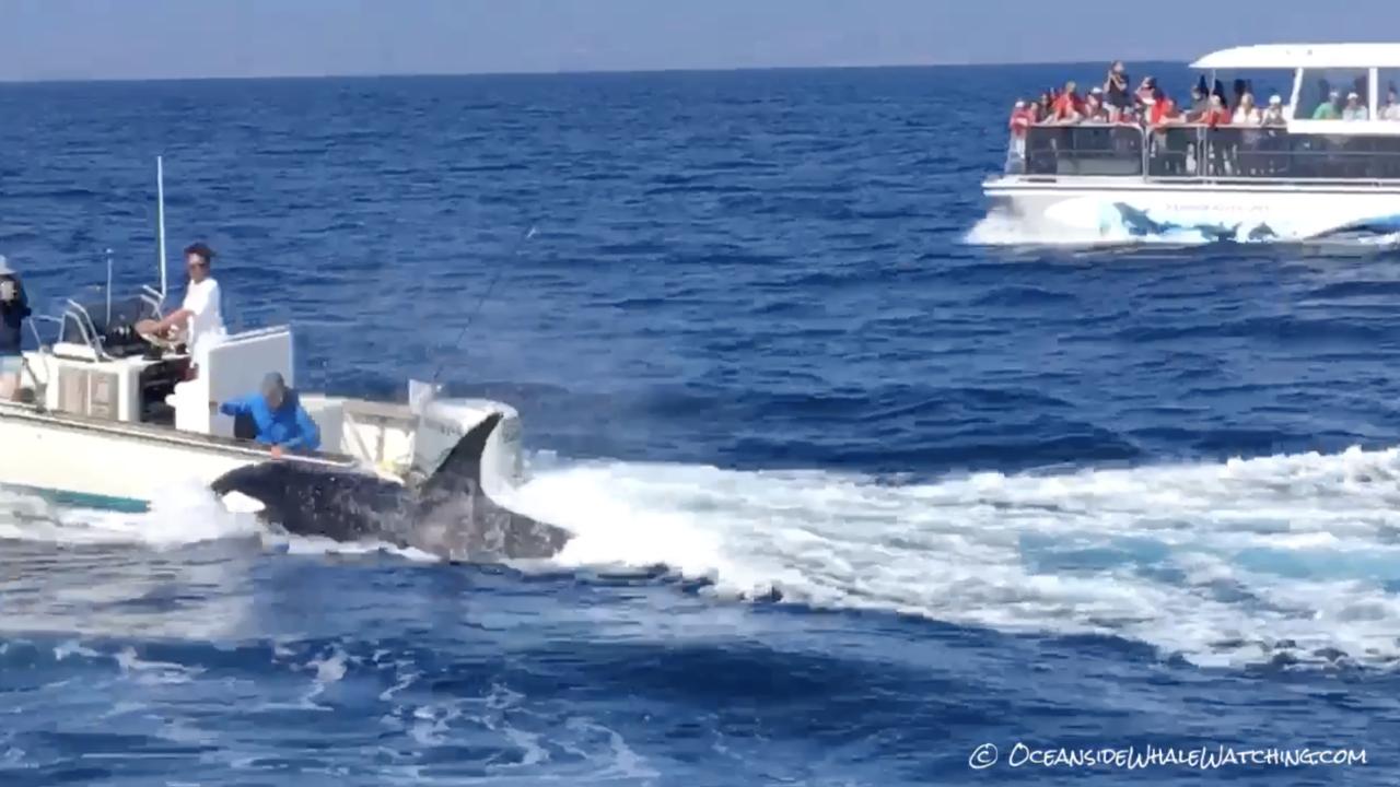 killer whale orca socal