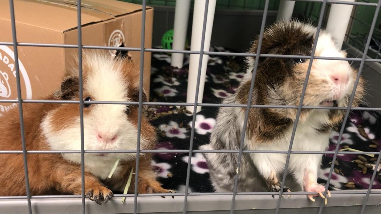 Nevada SPCA celebrates groundhog day