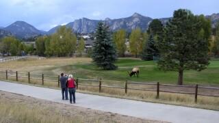 estes park elk