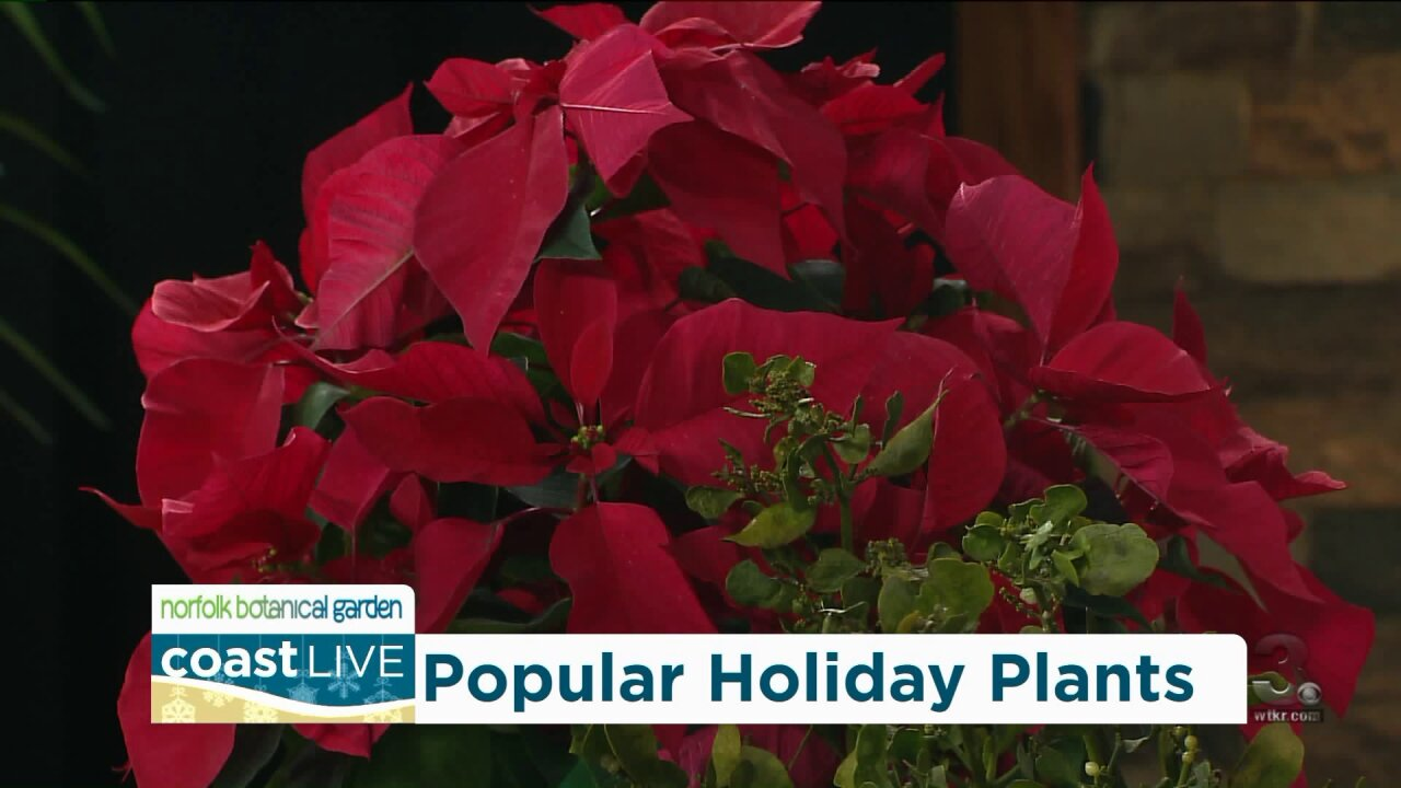 Those other holiday plants with Norfolk Botanical Garden on CoastLive