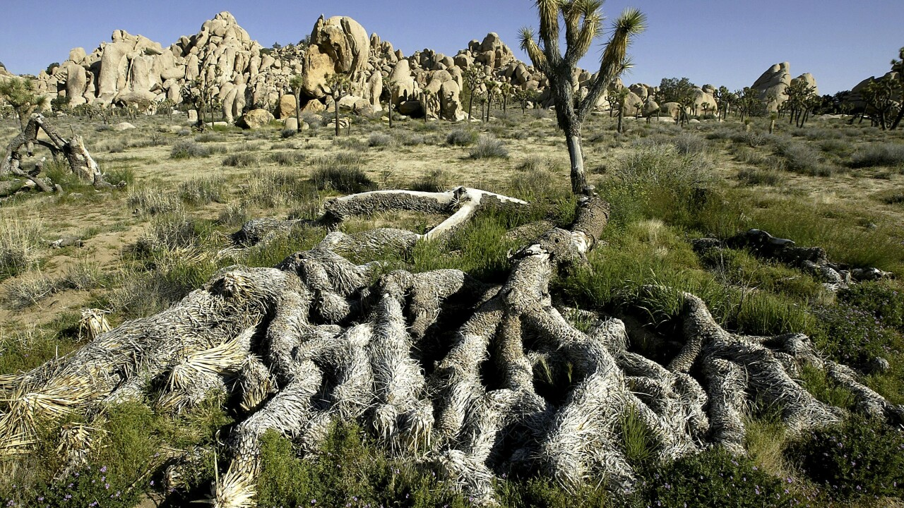 The Government Shutdown And Overflowing Toilets Force Joshua Tree