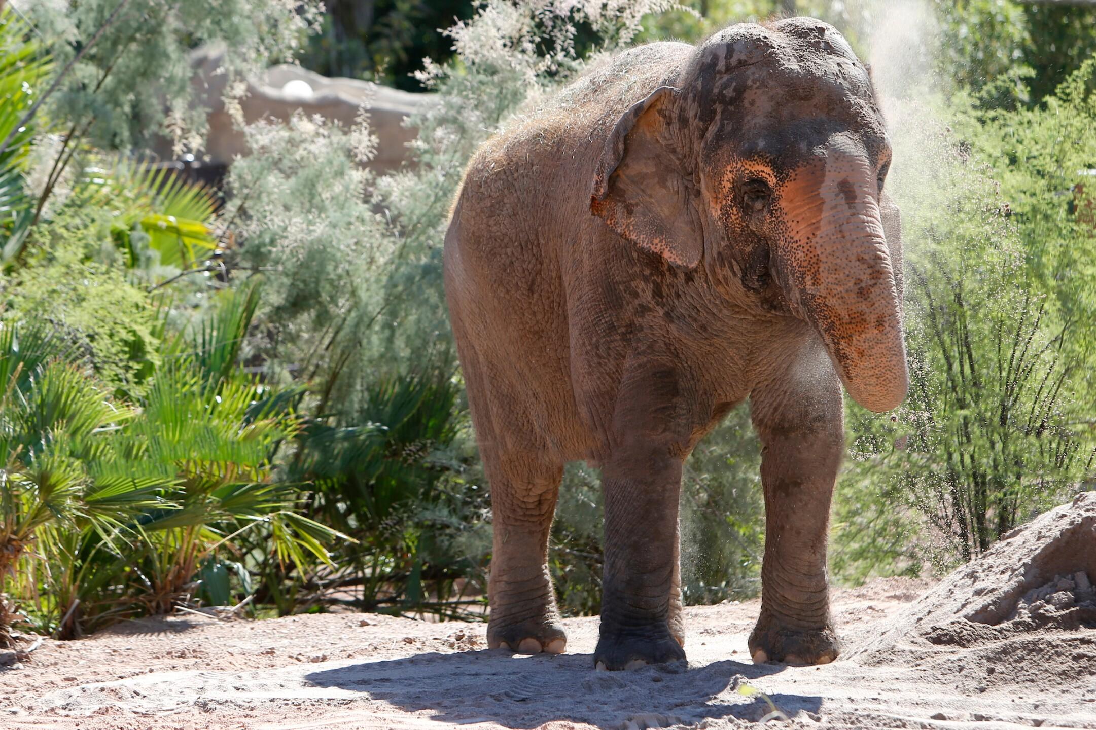Reba Asian Elephant Phoenix Zoo - Handouts15.jpg