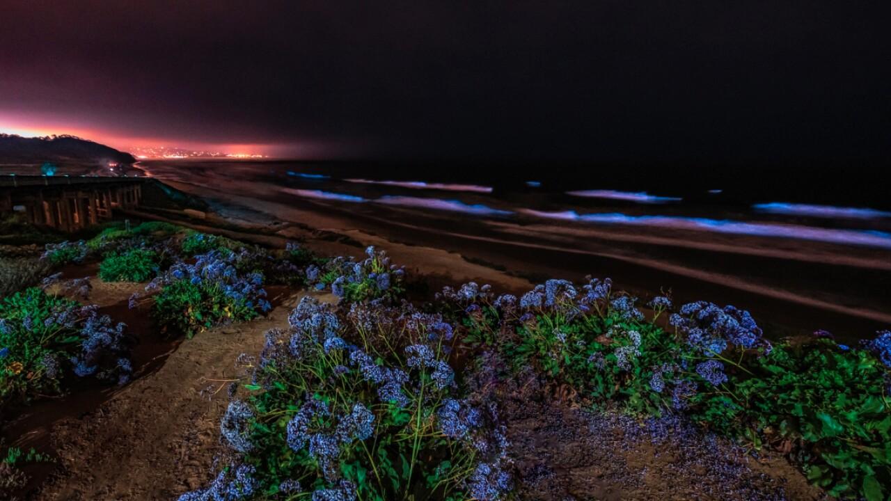 Bioluminescence returns to San Diego