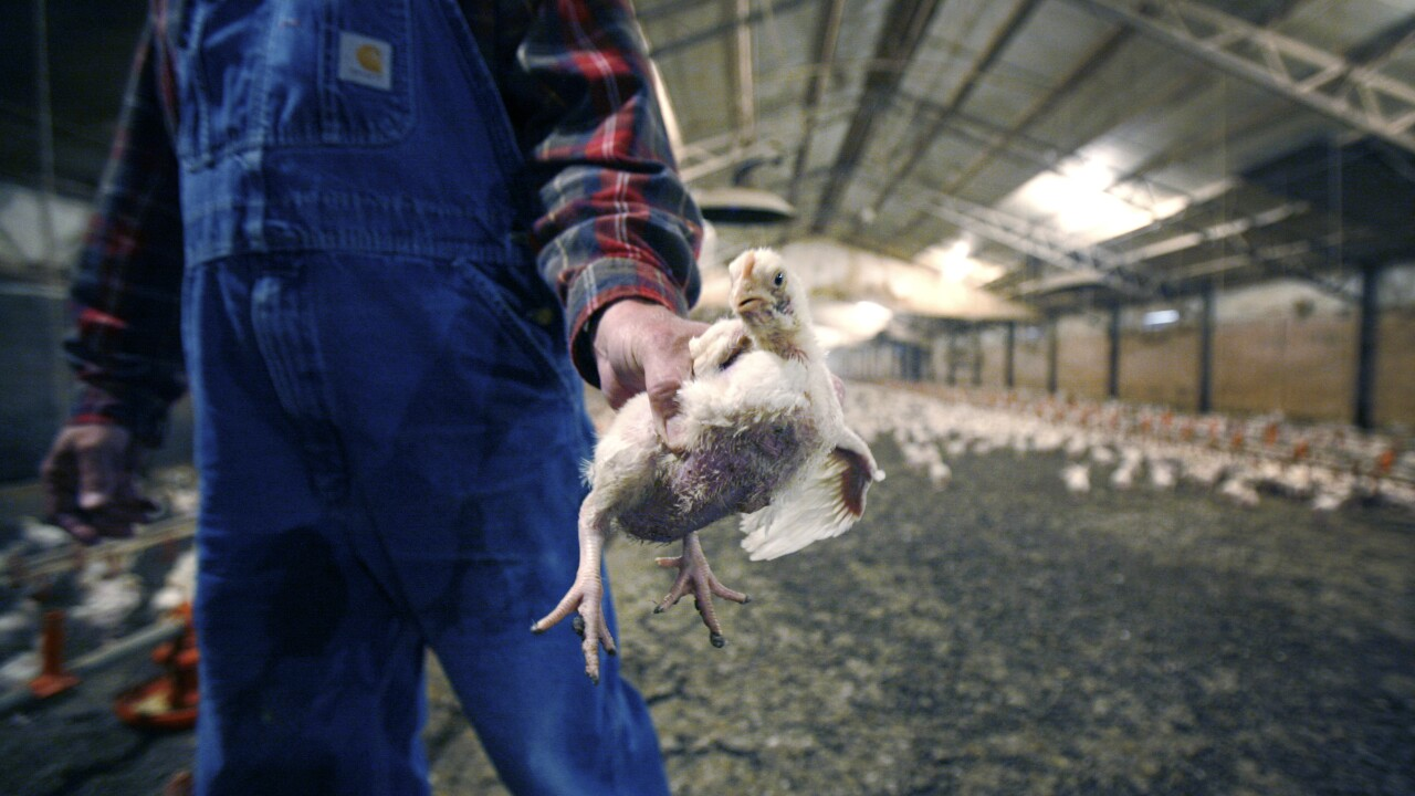 Executives indicted as part of chicken price-fixing scandal