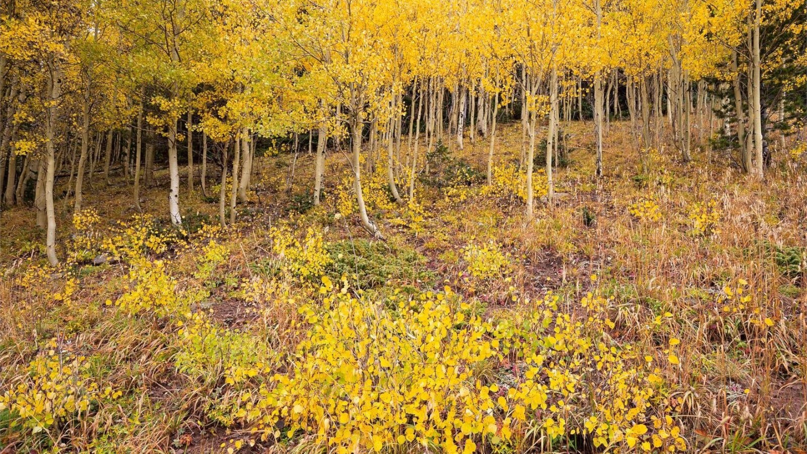 1Cuchara Pass near Highway 12 Colorado Mountain Images 4.jpg