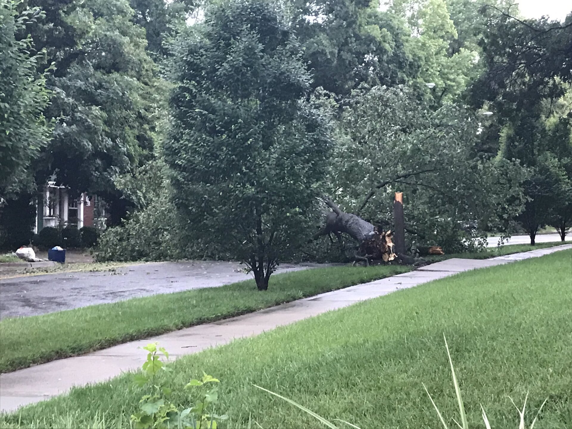 wornall road tree down.jpg