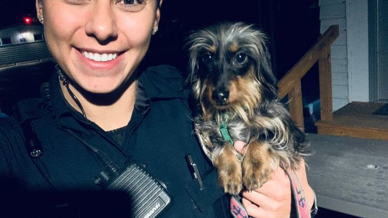 Dachshund puppy recovered after car theft in Arvada, returned to owners
