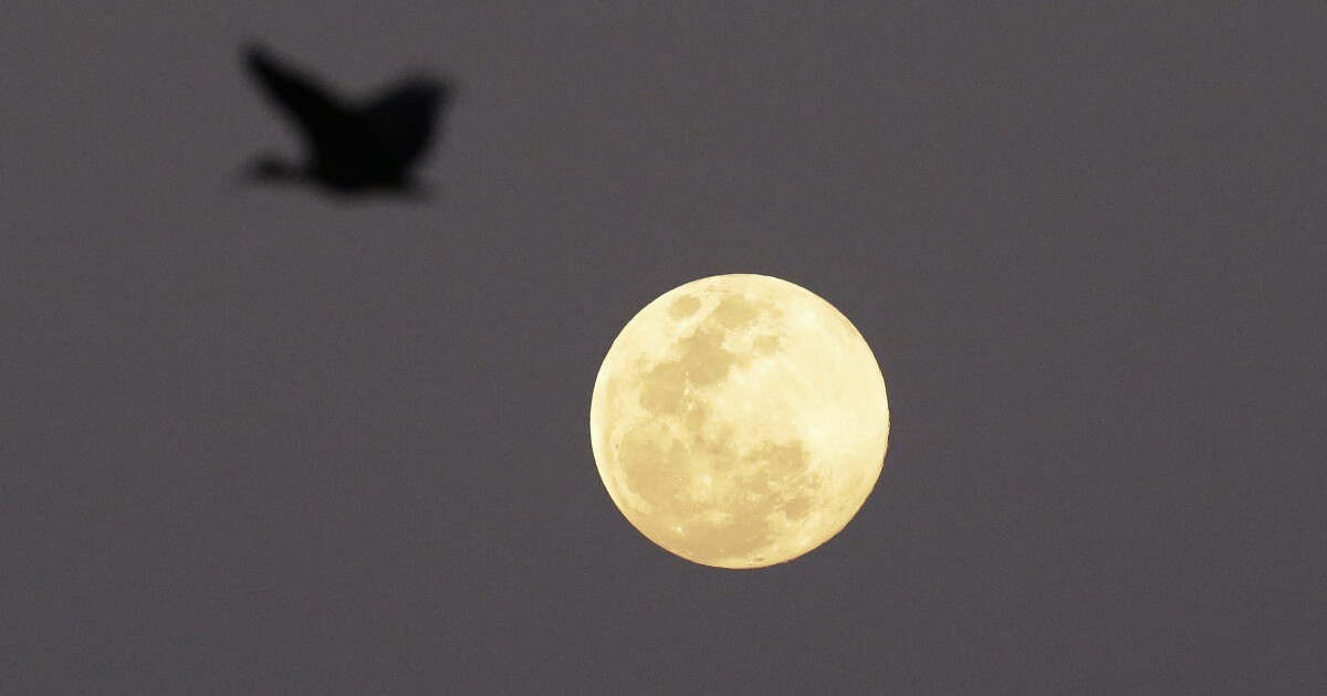 Look up to see the Harvest Moon