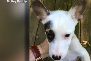 How puppy love brought a drug-resistant, life-threatening infection into an Oxford home