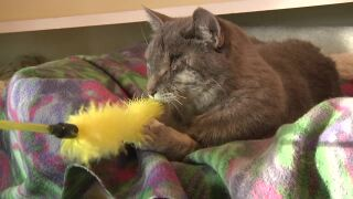 Pet of the Week: Jenny
