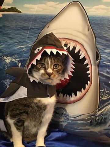 Yes! Pics: Pet Costumes