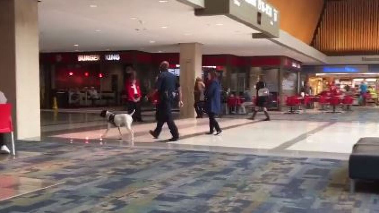 Authorities heighten awareness at Norfolk Airport, Amtrak Station following Brusselsattacks