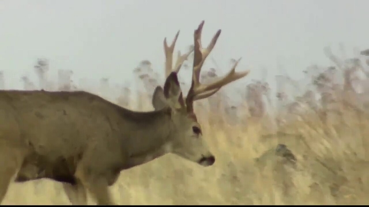 Second deer suspected of testing positive for CWD in Libby