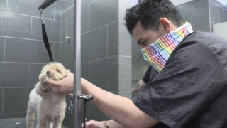 Dog grooming business booming as states ease COVID-19 restrictions