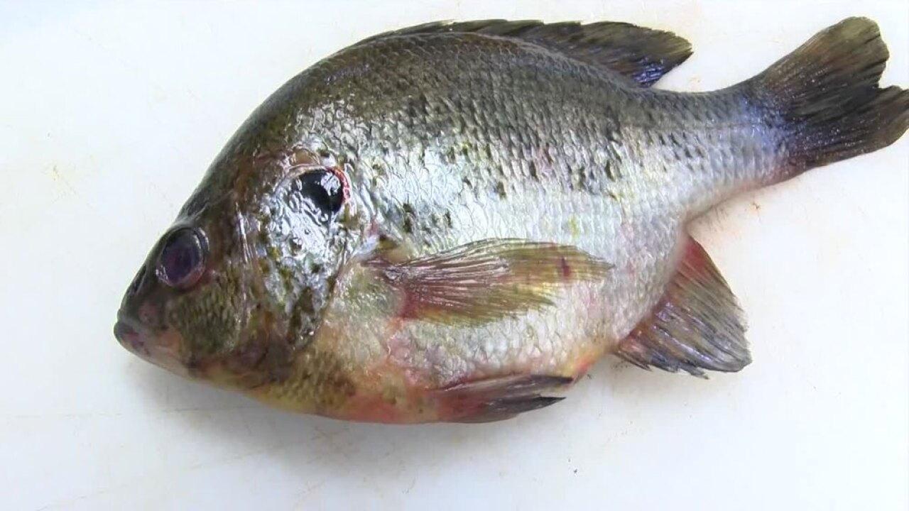wptv-fish-for-testing-.jpg