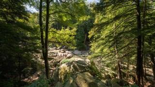 Gorge Loop Trail