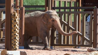 Reba Asian Elephant Phoenix Zoo - Handouts1.jpg
