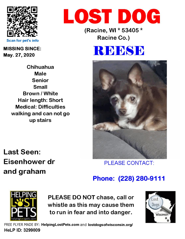 052720 Reese Chihuahua Senior.png