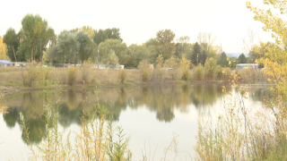 Shady Lane Pond