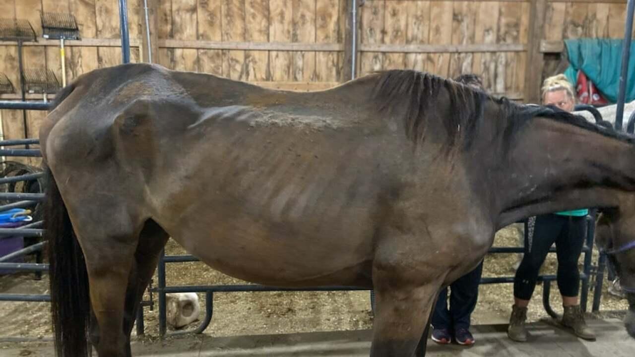 Portage Co APL horses rescued 4.jpeg