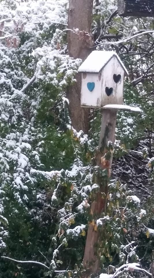 Birdhouse snow