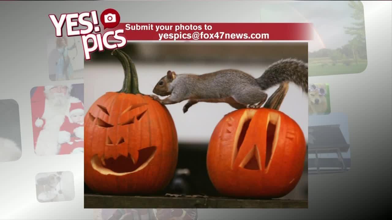 Yes! Pics - 10/11/19