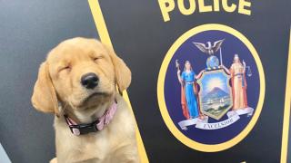 Hope, Jamestown Police dog