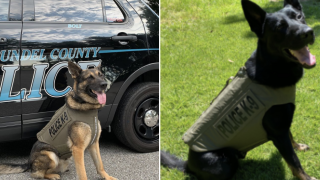 K9s receive body armor.png