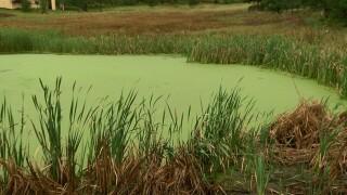 pond water.jpg