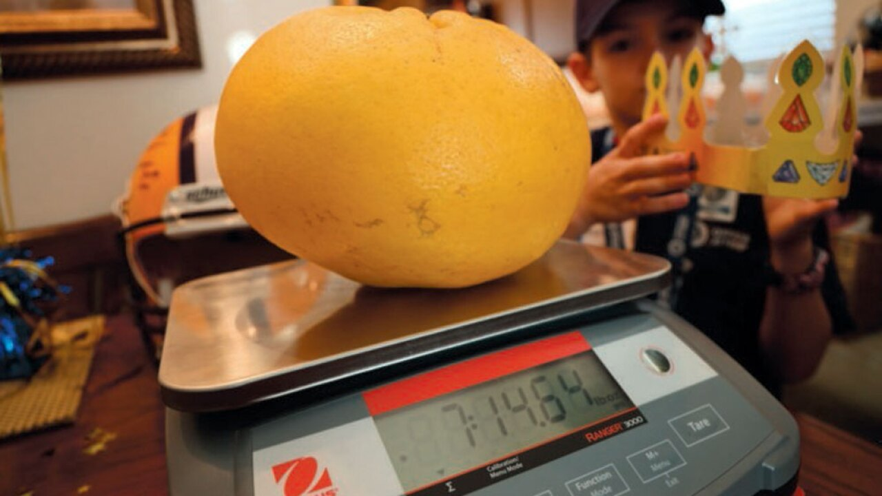 wptv-worlds-largest-grapefruit-.jpg