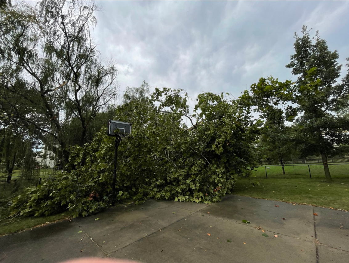 center grove tree down.PNG