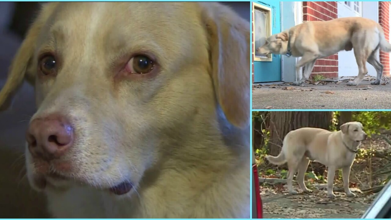 Chester family reunited with missing dog after New Year's Eve fireworksscare
