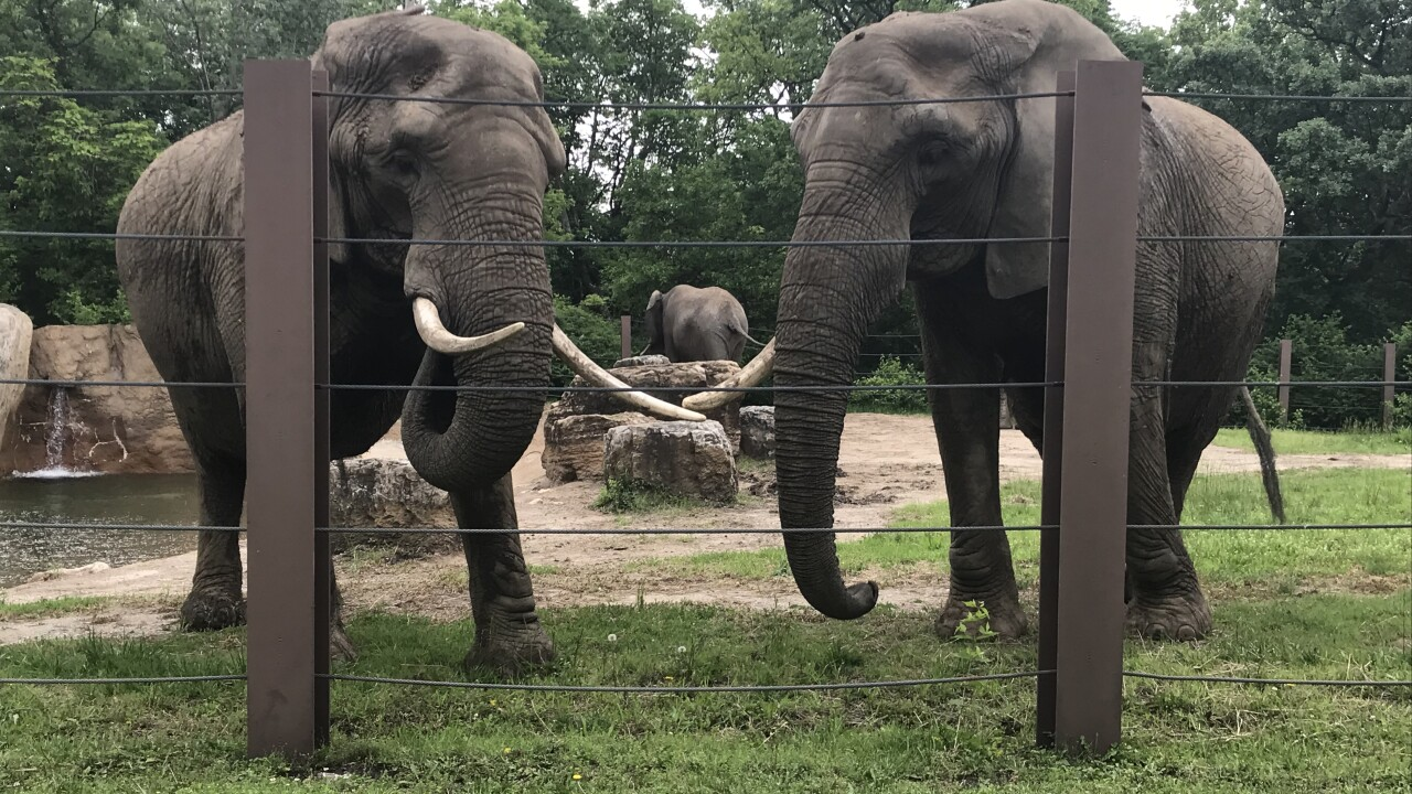 Escaped elephant has been returned to exhibit at Kansas City Zoo