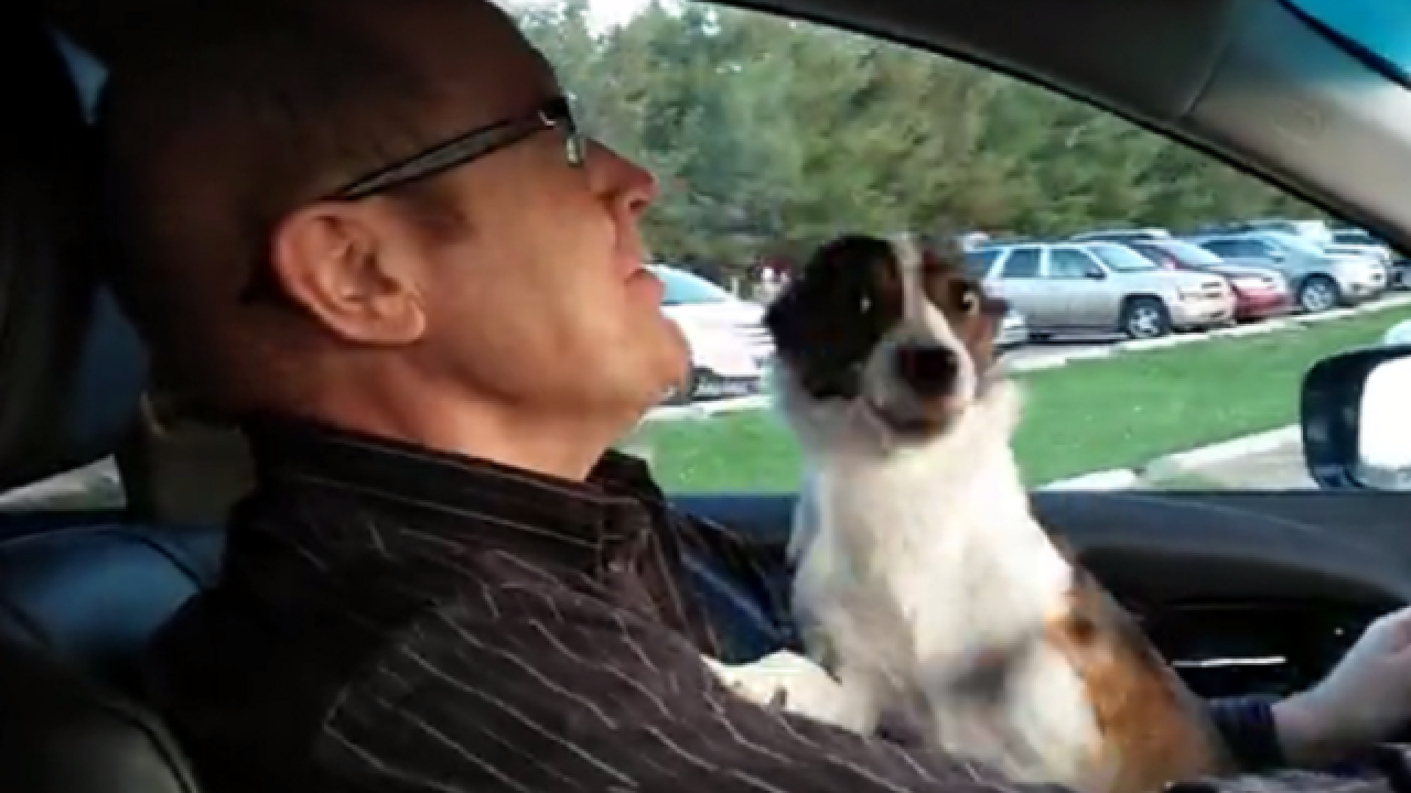 WATCH: Puppy realizes he's at dog park, loses it
