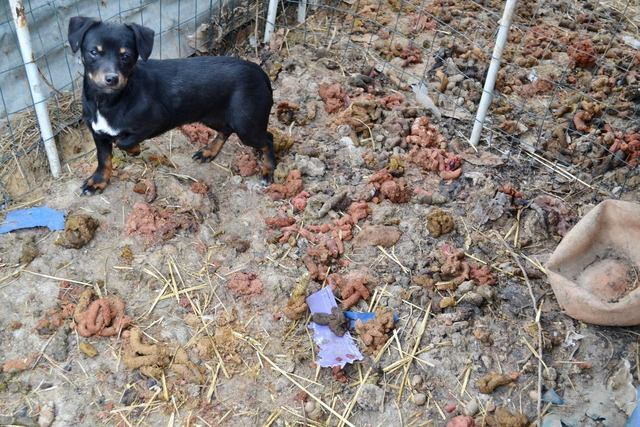 PHOTOS: Animals Rescued From Illinois Home