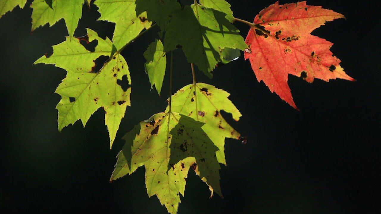 Leaf Peeping Climate Change