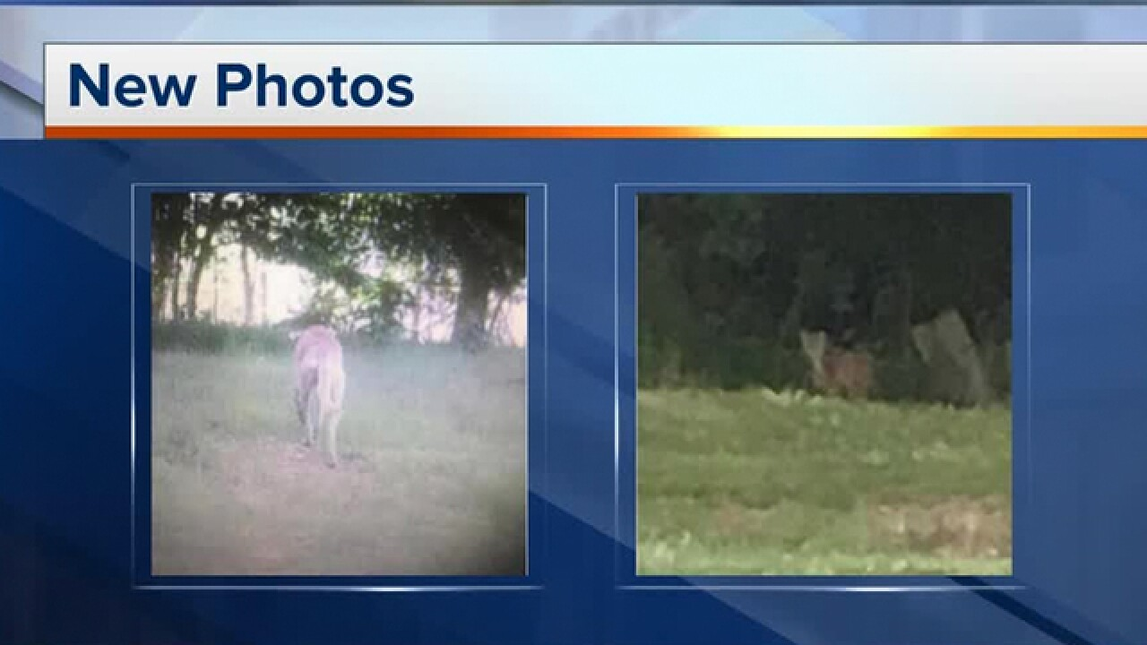 Ky. Sheriff Convinced Large Predator Killed Animals